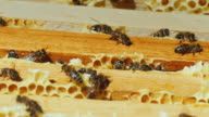 Bees work on the framework with honey top view video