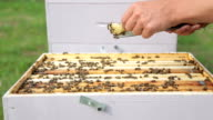 bees working in a beehive outdoors video