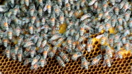 Bees working video