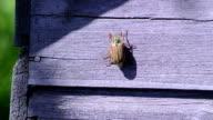 beetle purple  boards video