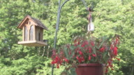 Begonia and birdfeeder 1 - HD 30F video