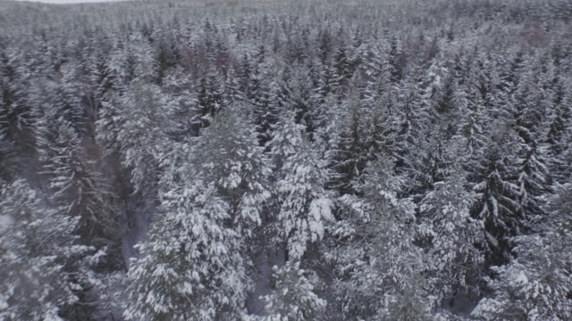 belarus winter time snowy forest river aerial panorama 4k video
