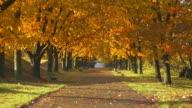 Bench in autumn park. Autumn landscape video