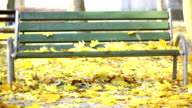 Bench in park, leaves fall, autumn video