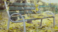 Bench In Playground, Leaves Fall, Autumn video