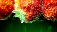 Berry, strawberries in water with bubbles video