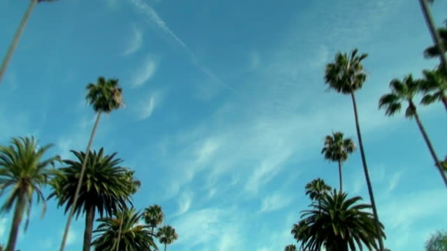Beverly HIlls palm trees - HD video