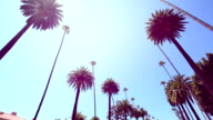 Beverly Hills Palm Trees video