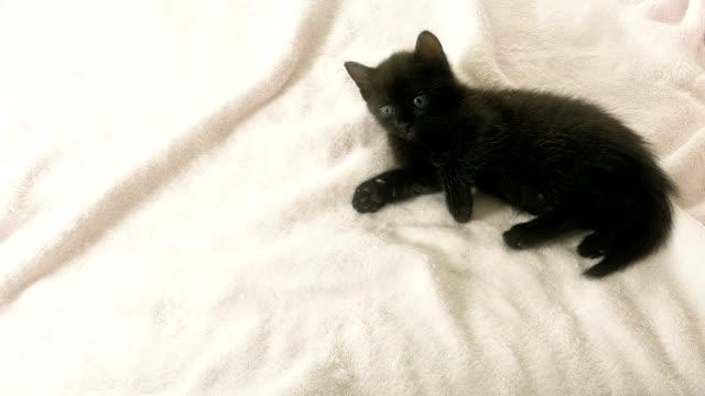 Bewildered looking black cat on pink blanket video