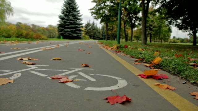 Bicycle sign on the road. Autumn. video