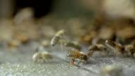 Bienen am Flugloch video