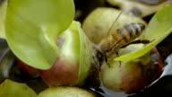 Bienen trinkt Wasser - Bee is drinking water video