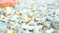 big and colorful Hermit crab walk out from human hand video