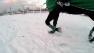 SLOW MOTION: Big black horse trotting in snow video