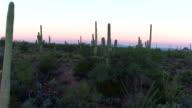 AERIAL: Big cactuses in amazing Arizona landscape before sunrise video