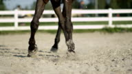 CLOSE UP: Big dark brown stallion doing a leg-yield haunches-in in sandy manege video