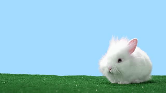 Big eared bunny video