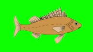 Big Fish Ruff Swimming video