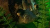 big fish video