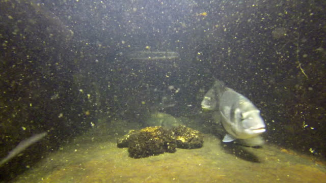 Big Fishes Swimming in Aquarium video