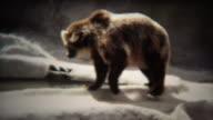 1972: Big grizzly bear walking around gray concrete zoo habitat. video