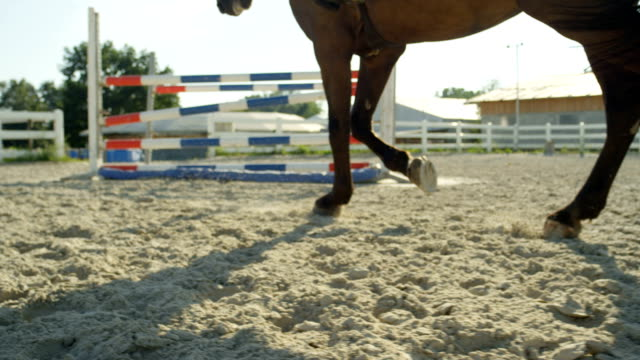 DOF: Big horse with rider warming up for a jumping competition in sandy arena video