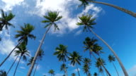 Big lush palm trees swinging on a tropical windy day in sunny summer video