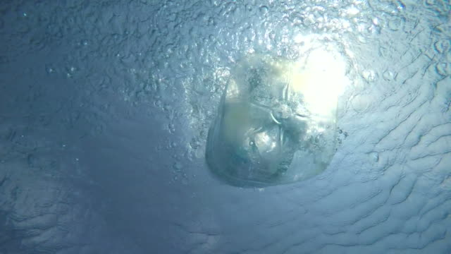 Big Plastic Bottle Thrown into a Quiet Pool of Clear and Fresh Water Illuminated by the Sun in the Background. video