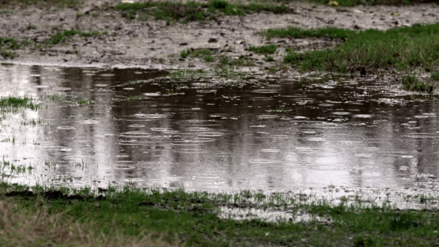 Big puddle on muddy ground with rain drops falling and trees reflections video