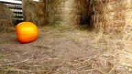 Big pumpkin roll on hayloft floor, fall outside, slow motion video
