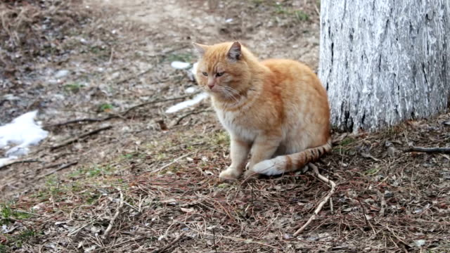 Big red homeless cat video
