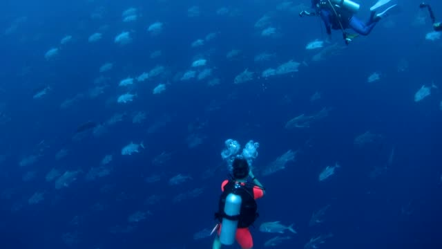 Big school of trevally swim pass divers video