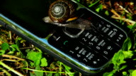Big Snail crawling on a cell phone video