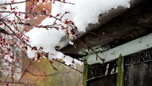 Big snow cap on the roof of the house on the corner of the house.Melting snow in the spring video