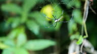 big spider on web video