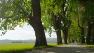 SLOW MOTION: Big tree avenue in sunny spring video