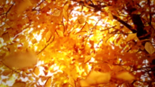 Big tree losing leaves loop video