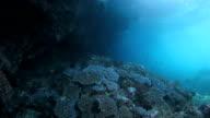 Big underwater cliff with sunlight video