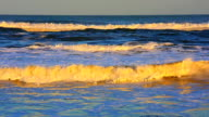 Big wave on the beach at sunset video