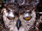 Big Yellow Owl Eyes video