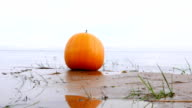 Big yellow pumpkin on wet sand, small lake waves, close view video
