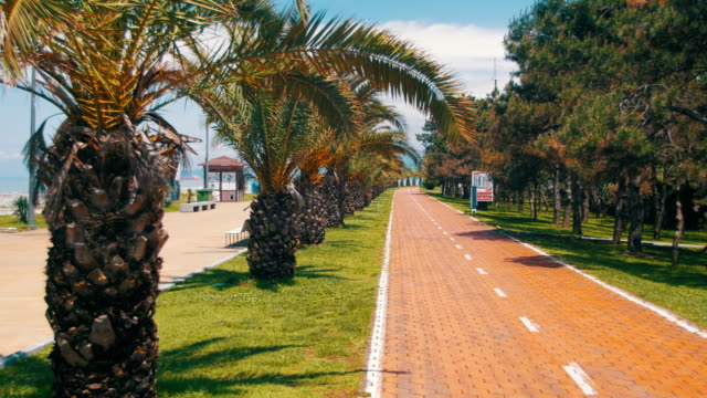 Bike Path and Palm Trees in the Resort in the City video