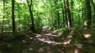 4K: Bike ride in the forest video