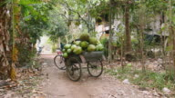 Bike trailer loaded with bunches of coconuts and jack fruits video