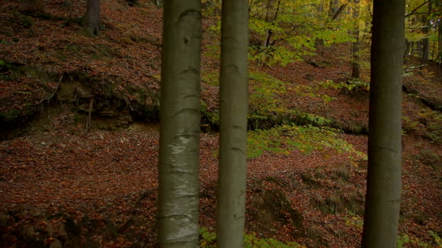 AERIAL: Biker in autumn forest video