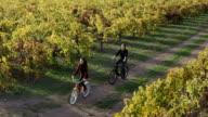 Biking in Napa Valley Vineyards video