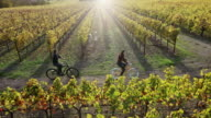 Biking in Vineyards video