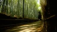 Biking through a bamboo forest video
