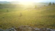 biking woman cycling on green meadow opposite sunset video