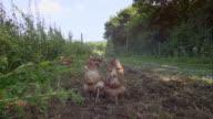 Biodynamic farming video